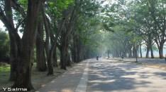 Gerbang Sebuah Komplek Perumahan menyerupai 'hutan' buatan