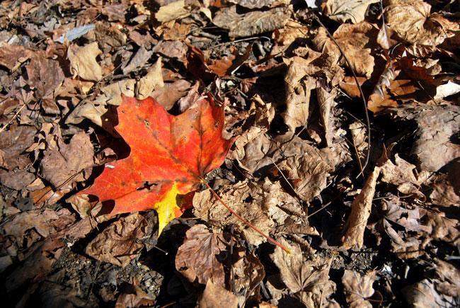 Aaron's Lens - Autumn Leaves