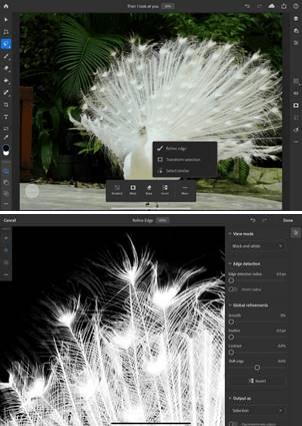 圖像 2:在 Adobe Photoshop on iPad 處理頭髮、皮毛等最棘手的主體時以精確的像素選取獲得逼真的效果
