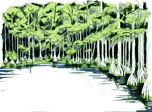 cyrpess-swamp