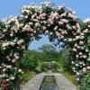 東武トレジャーガーデンのバラの満開時期や見頃についてご紹介!
