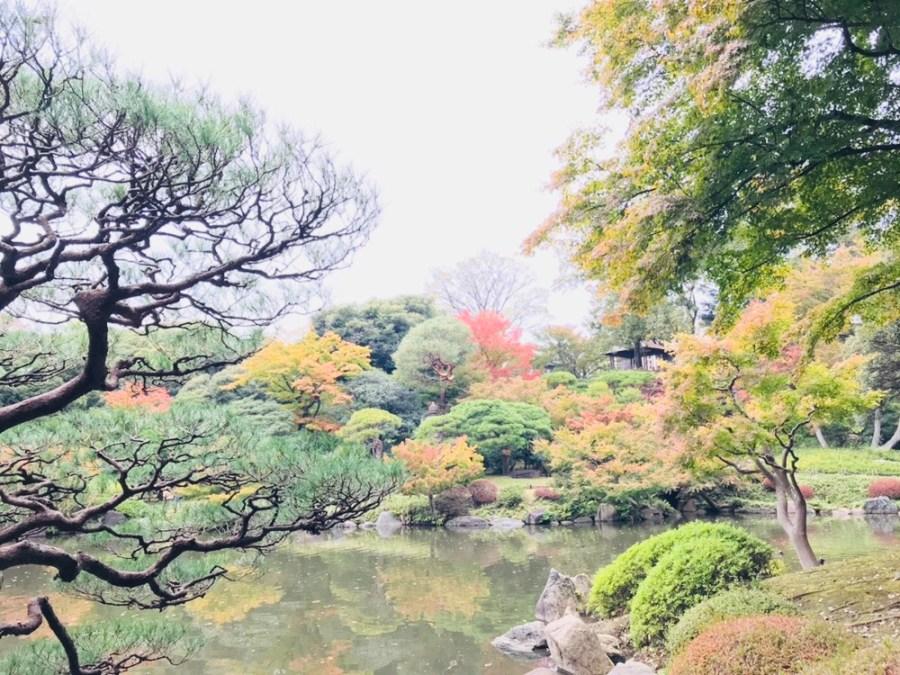 色付き始めた六義園の紅葉