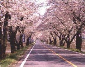 栃木,お花見スポット,ドライブ,雨