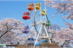 栃木,お花見スポット,開花時期,屋台