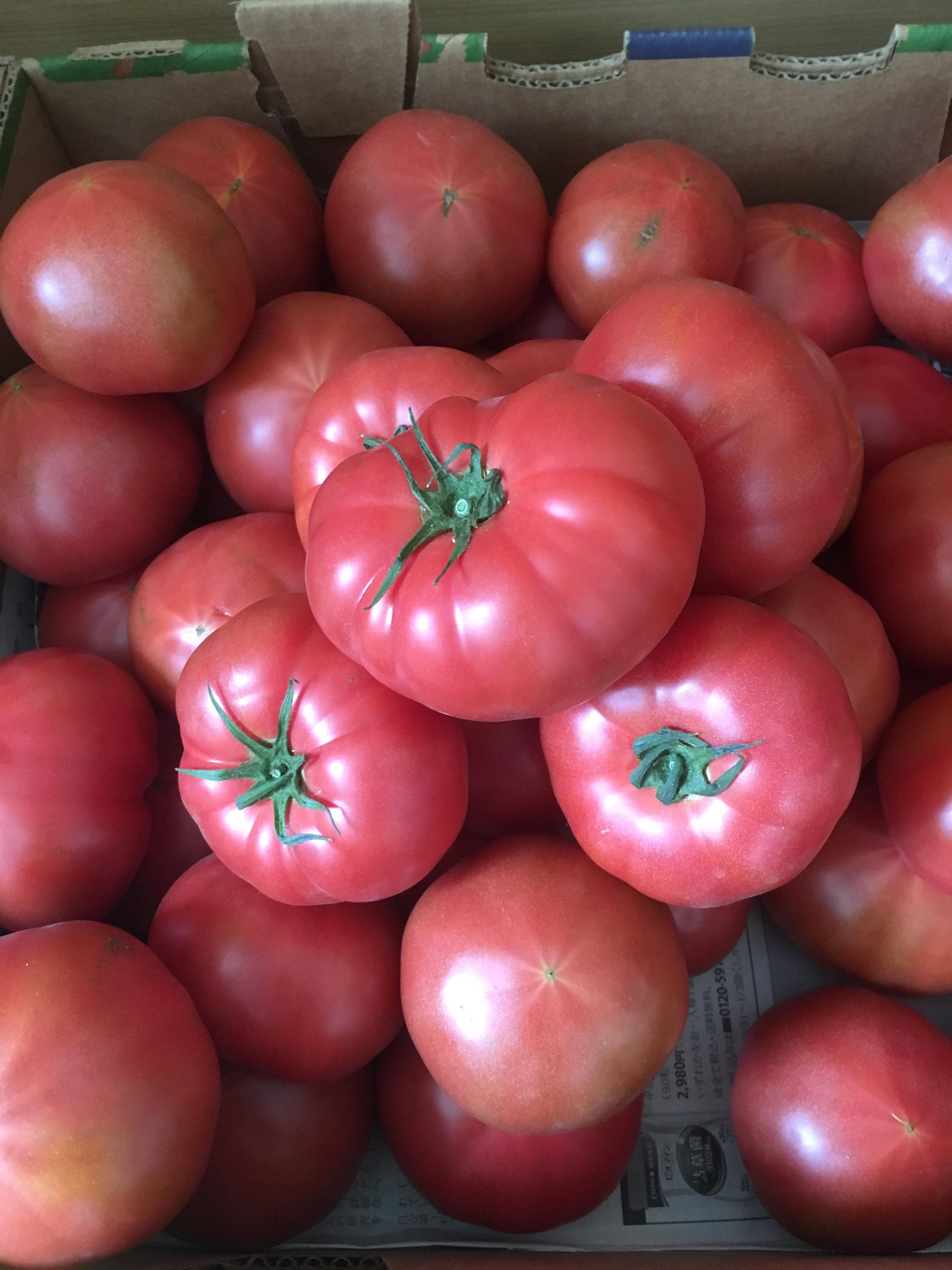 温泉 大人気商品 ニセコ産トマトのご紹介です〜