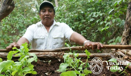 fundacion-haciendas-mundo-maya-siembra