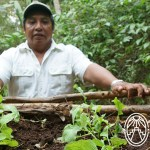 Haciendas Foundation of the Maya World – Medicinal Herbs