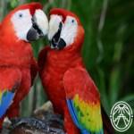 Endangered Species in Yucatán
