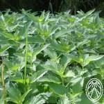 Maya Herbalists