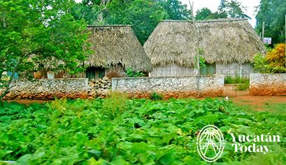 Plantio casa maya