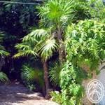 "Jardín Botánico Regional ""Roger Orellana"" – A Live Garden Museum"