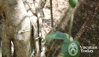 San-Manuel-Culebra-Serpiente