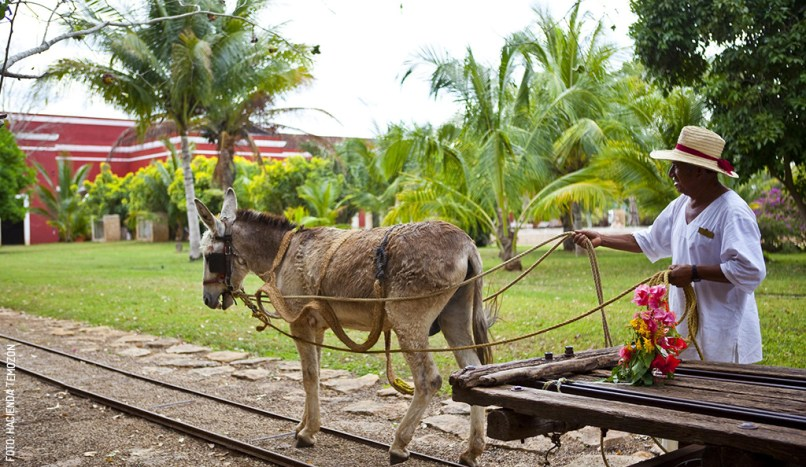 hacienda-temozon-truck-burro-carreta