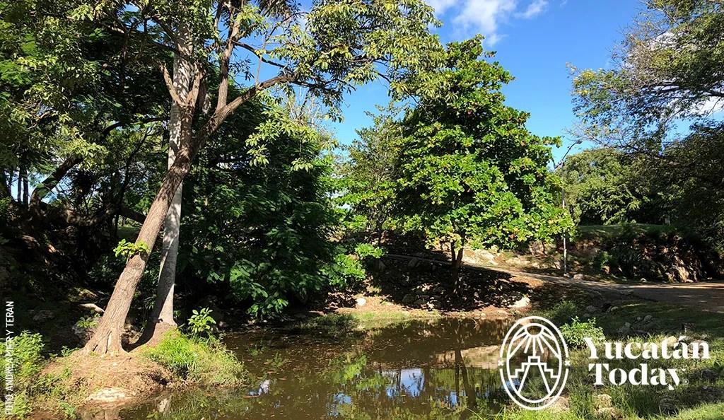 Acerca a los Niños a la Naturaleza en Mérida