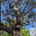 The Magical Properties of the Jabín Tree