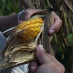 The Milpa: From Start to Finish