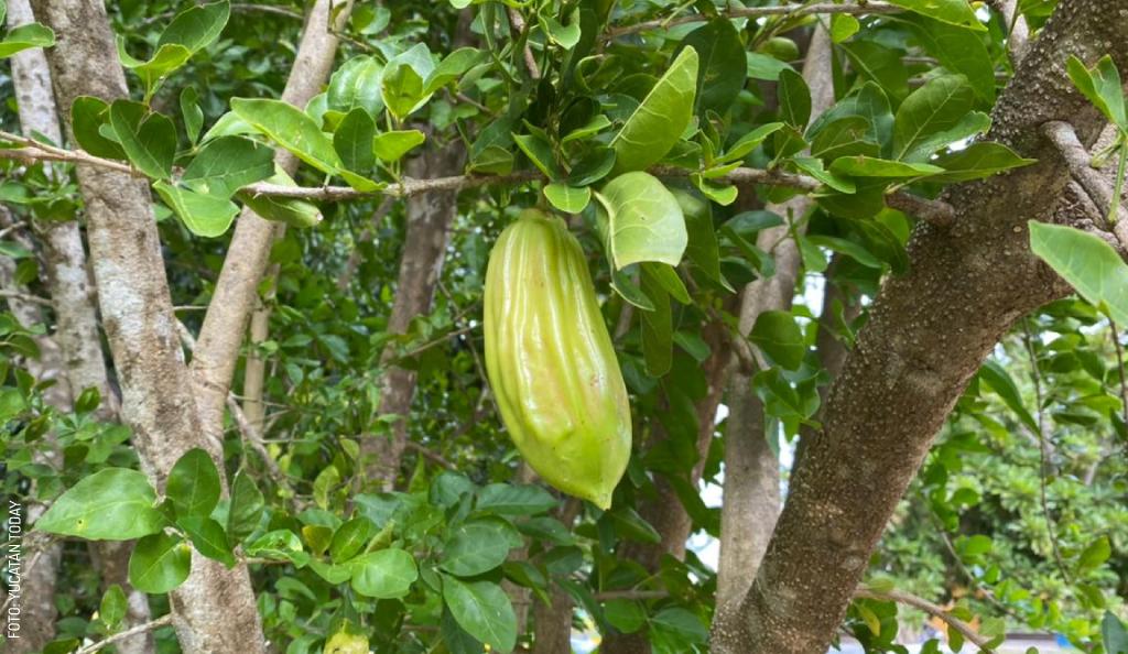 Adventures in Eating in Yucatán – Vegetarian Edition