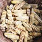 Tortillas de Maíz, el Superalimento de Yucatán