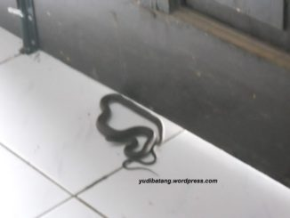 ular dipintu