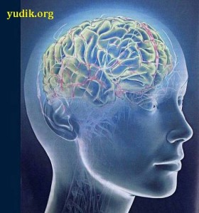 brain_001