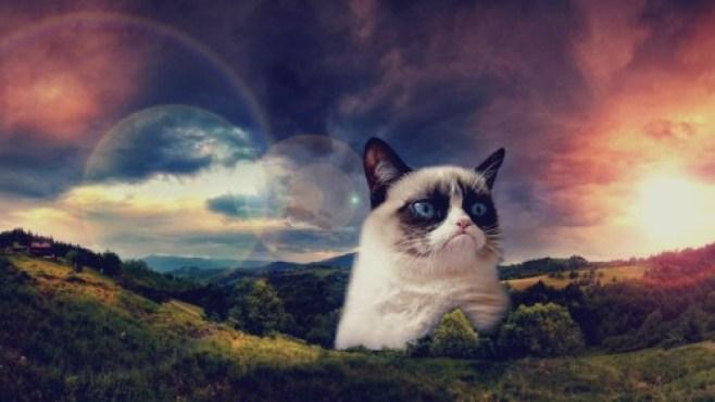 Funny-Grumpy-Cat-Space-13-21087-HD