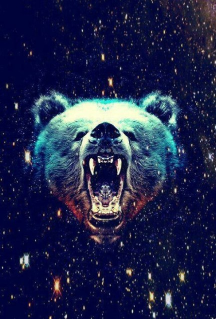 animal-background-bear-blue-Favim.com-1959231