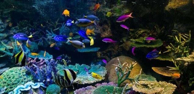 水族館の熱帯魚