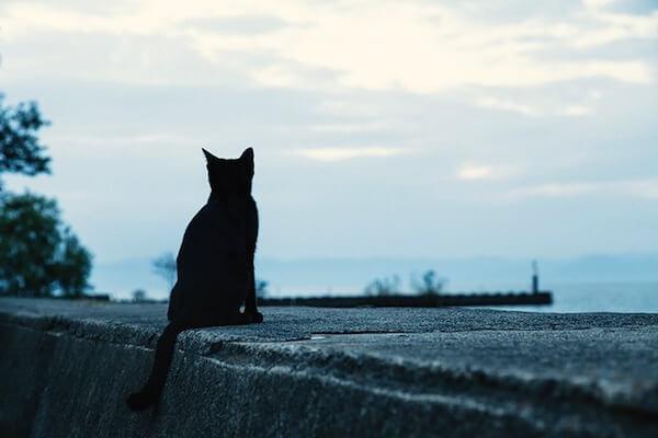 埠頭から海を見る黒ねこ