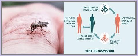 म्याग्दीमा थप ३ जनामा डेंगु, संक्रमितको संख्या २५ पुग्यो