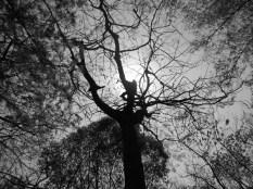 sun_rising_above_tree