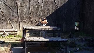 屠体給仕される鹿