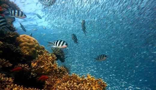 魚が原因!食中毒「シガテラ」とは?熱帯の魚は小さいほど良い!?