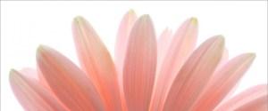 cropped-pink-flower.jpg
