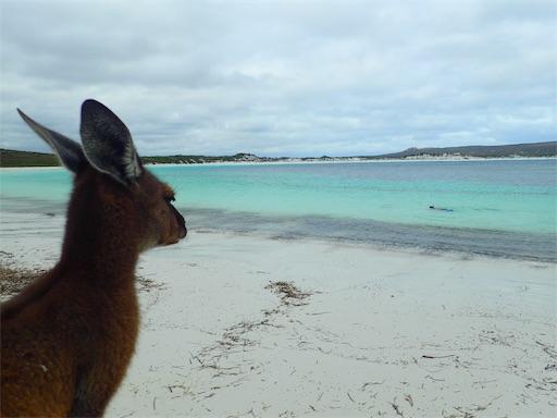 オーストラリアからニュージーランドへ! next ワーホリ