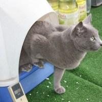 猫でもできるドイツ語講座 パート61