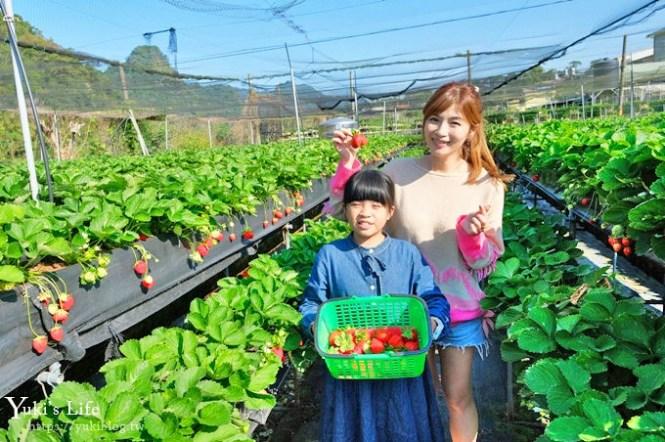 苗栗大湖採草莓一日遊【六合高架牛奶草莓農場】超大草莓又紅又香!不怕鞋子髒掉喲~