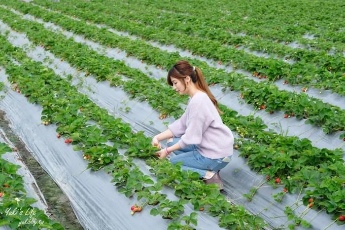 南投也可以採草莓「國姓鄉阿地草莓園」場地很大自己來尋寶