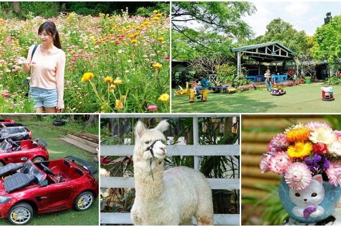 桃園景點》青林農場~超人氣親子好去處!麥桿菊花海太浪漫,草泥馬,烤肉~桃園好玩景點!