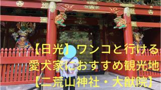 【日光】ワンコと行ける愛犬家におすすめ観光地【二荒山神社・大猷院】 アイキャッチ