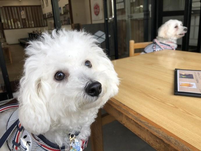 【山城屋】善光寺近くで犬と一緒に蕎麦が食べられる店【仲見世通り】 2階席