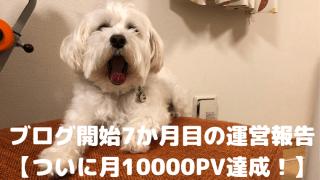 ブログ開始7か月目の運営報告【ついに月10000PV達成!】 アイキャッチ