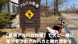 【那須アルパカ牧場】で犬と一緒にモフモフのアルパカと触れ合おう アイキャッチ