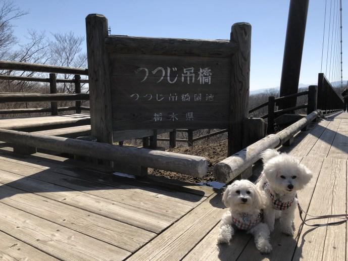 【恋人の聖地】恋人と行くべきつつじ吊橋と那須高原展望台【犬OK】 吊橋 入口