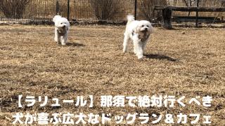 【ラリュール】那須で絶対行くべき 犬が喜ぶ広大なドッグラン&カフェ アイキャッチ