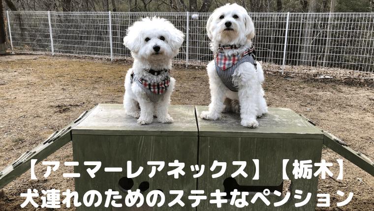 【アニマーレアネックス】【栃木】 犬連れのためのステキなペンション アイキャッチ