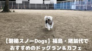 【磐梯スノーDogs】福島・猪苗代でおすすめのドッグラン&カフェ アイキャッチ