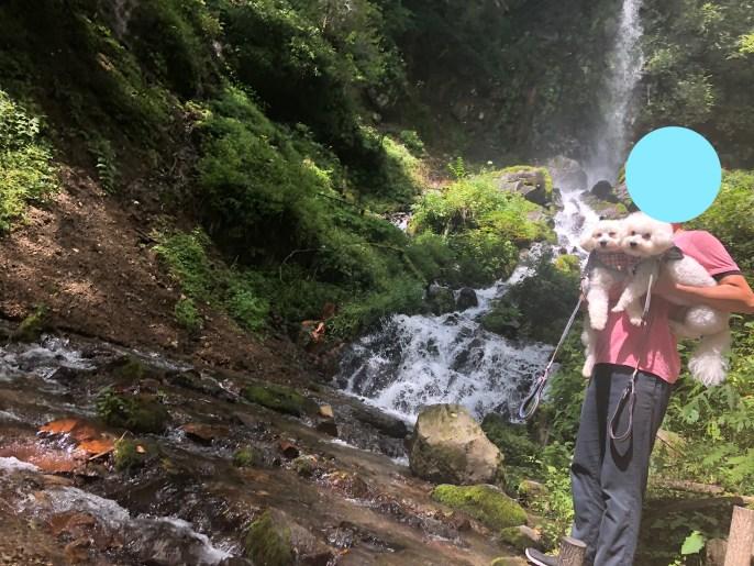 【千ヶ滝せせらぎの道】で犬と一緒にハイキングを楽しもう【軽井沢】 千ヶ滝4