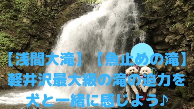 【浅間大滝】【魚止めの滝】 軽井沢最大級の滝の迫力を 犬と一緒に感じよう♪ アイキャッチ