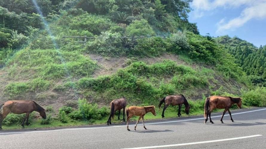 野生の馬さんたち