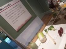 Exhibition72-volcano-16